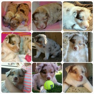 9 wks of Mindy